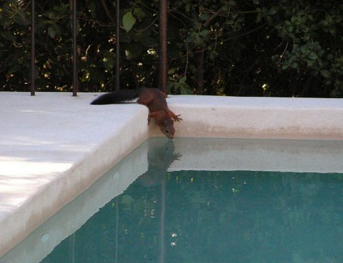 How to Keep Wildlife Away from Your Pool