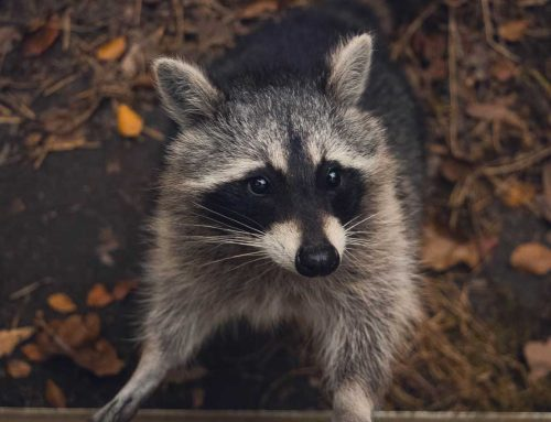 5 Easy Ways to Keep Wildlife Away