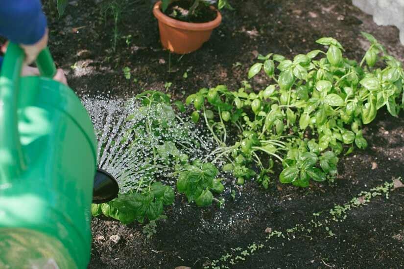 bugs in garden