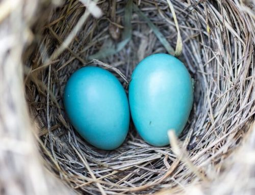 How to Keep Birds from Nesting on Your Porch